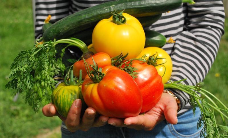 Legumes nas mãos de uma pessoa