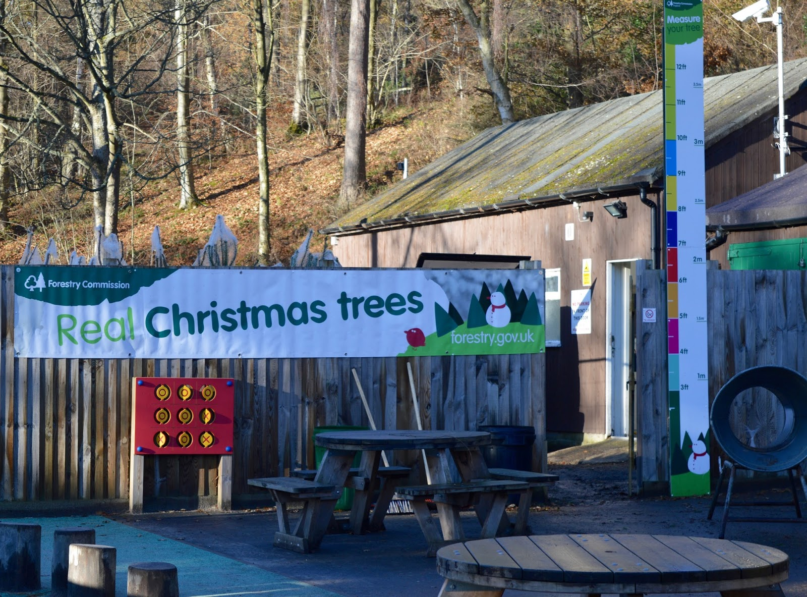 Why you should choose a real, sustainable Christmas tree from a Forestry Commission Forest (Hamsterley Forest in Durham and Kielder Forest in Northumberland) -  kids activities