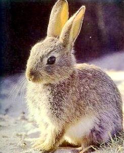 Foto de un conejo bien despierto