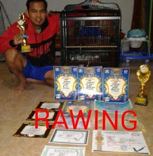 Kacer Bagong Jadi Juara