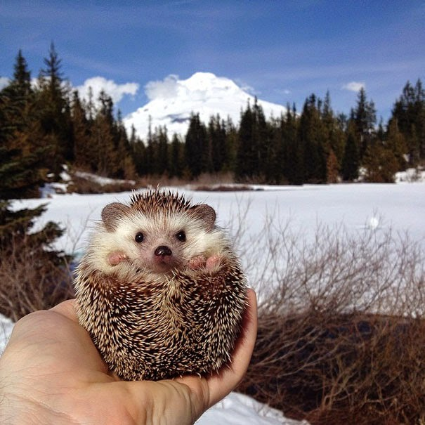 Meet Biddy, The Travelling Hedgehog