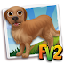 Fv 2 Golden Retriever (baby ,adult )