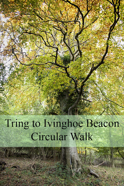 Tring Station to Ivinghoe Beacon Circular Walk - read more including maps