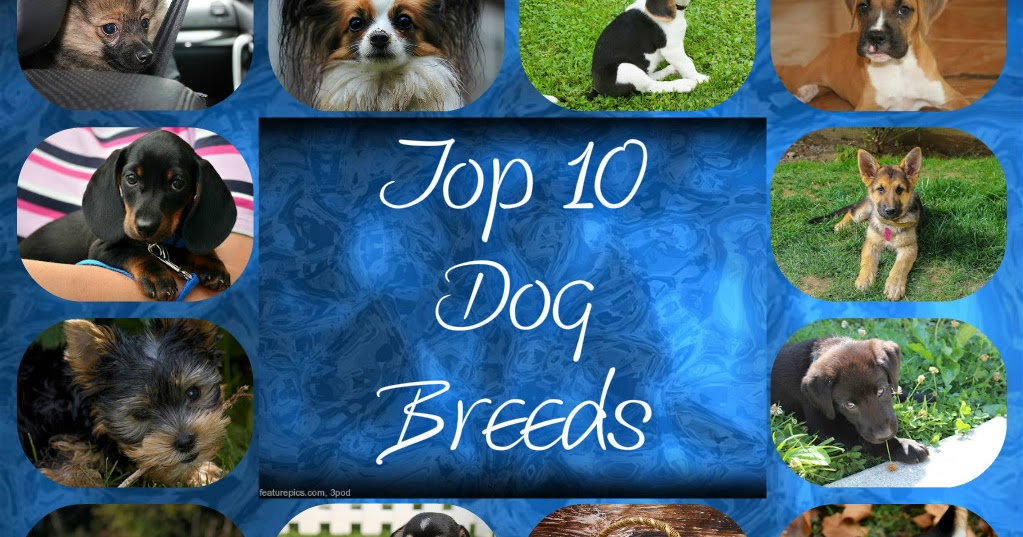 Good Natured Dog Food Reviews