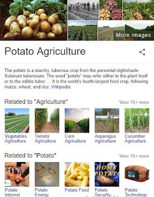 How to Begin Irish Potato Farming Business in Nigeria | Business Plan & Feasibility Study