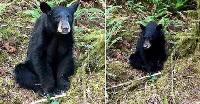 Les autorités tuent un ourson qui s'était laissé apprivoiser par les humains.