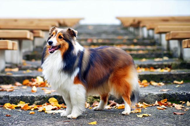 Czy Twój pies potrzebuje witamin?