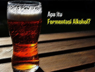 "Fermentasi Alkohol - Secara etimologi, pengertian fermentasi berasal bahasa latin yakni dari kata ""fervere"" atau ""mendidih.  Sedangkan secara terminologi, bahwa fermentasi adalah menggambarkan aksi ragi pada ekstrak buah selama pembuatan minuman beralkohol. Hal itu didasarkan pada tahapan proses fermentasi yang sebelumnya.  Selain itu, pengertian Fermentasi adalah suatu cara untuk mengubah substrat menjadi produk tertentu yahg dikehendaki dengan adanya bantuan dari Mikroba.  Selain itu menurut Muchtadi dan Ayustaningworno (2010) mengatakan bahwa defini fermentasi secara teknik memiliki arti bahwa fermentasi adalah sebagai suatu proses oksidasi anaerobik atau partial anaerobik karbohidrat yang menghasilkan alkohol serta beberapa asam, akan tetapi banyak proses fermentasi menggunakan subtrak protein dan lemak. Sedangkan pengertian fermentasi menurut para ahli yang lainnya misalnya menurut Suprihatin (2010) bahwa yang dimaksud dengan Fermentasi adalah suatu proses perubahan kimia pada suatu substrat organik melalui aktivitas enzim yang dihasilkan oleh mikroorganisme. Tidak hanya itu, fermentasi dapat diketahui dengan berdasarkan pada karakteristik atau ciri-ciri fermentasi. Ada beberapa landasan untuk mengetahui bahwa suatu produk makanan atau minuman tersebut adalah hasil fermentasi diantaranya berkaca pada Fermentasi terjadi ke dalam proses glikolisis.  Selain itu, Energi (ATP) yang terbentuk lebih sedikit jika dibandingkan dengan Respirasi Aerob dan Terjadi pada organisme yang tidak membutuhkan oksigen bebas, ex: bakteri dan protista yang hidup di rawa, lumpur atau tempat-tempat lain yang tidak mengandung oksigen. Bahkan dapat diketahui dengan Tidak terjadi penyaluran elektron ke siklus krebs dan transpor electron. Sebagaimana manfaat fermentasi yang besar dalam kehidupan masyarakat, fermentasi telah menjadi suatu proses yang bertujuan mengendalikan pertumbuhan mikroba, mempertahankan gizi yang dikehendaki dan menciptakan kondisi kurang memadai untuk mikrobia kontam"