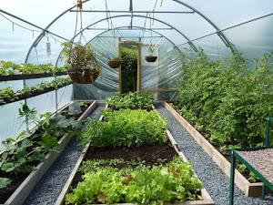 Manfaat Plastik Uv - Green House Menggunakan Materi Plastik Uv Lebih Menguntungkan Dari Pada Menggunakan Materi Kaca