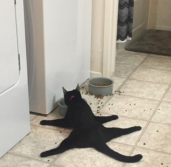 Những trò ném đá vào hội nghị của bọn mèo quái tính