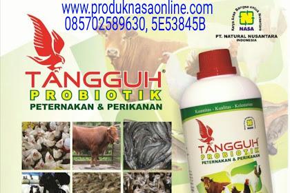 Jual Probiotik lele Paling Bagus
