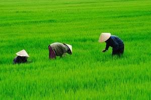 Sejatinya Petani adalah Penjaga Alam