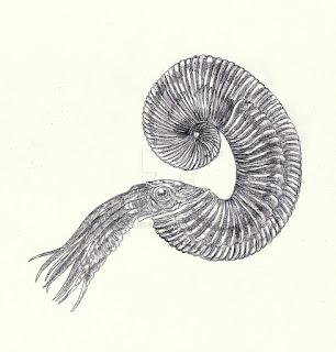 cretacic invertebrata