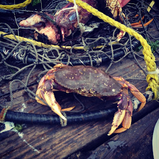 Crabbing in Newport Oregon