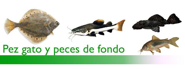 http://www.acuarioamazonic.com/2017/08/pez-gato-y-peces-de-fondo.html
