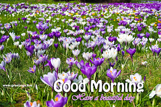 morning flowers greetings images