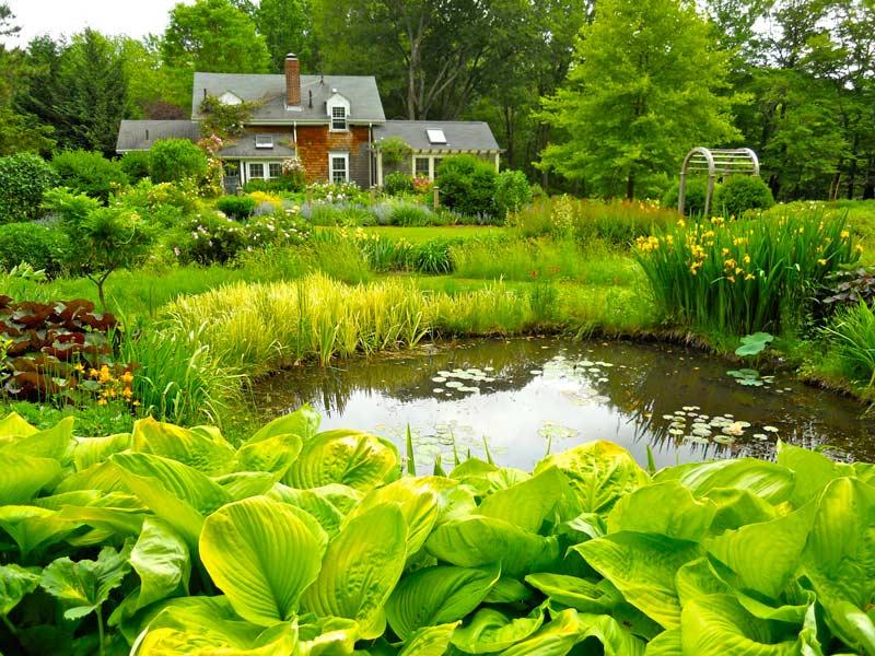 Растения возле пруда фото