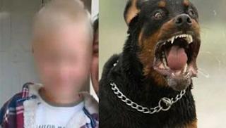 Κοζάνη: Αποζημίωση 150.000 ευρώ για τη μητέρα του 5χρονου Στάθη που σκότωσαν τα ροτβάιλερ