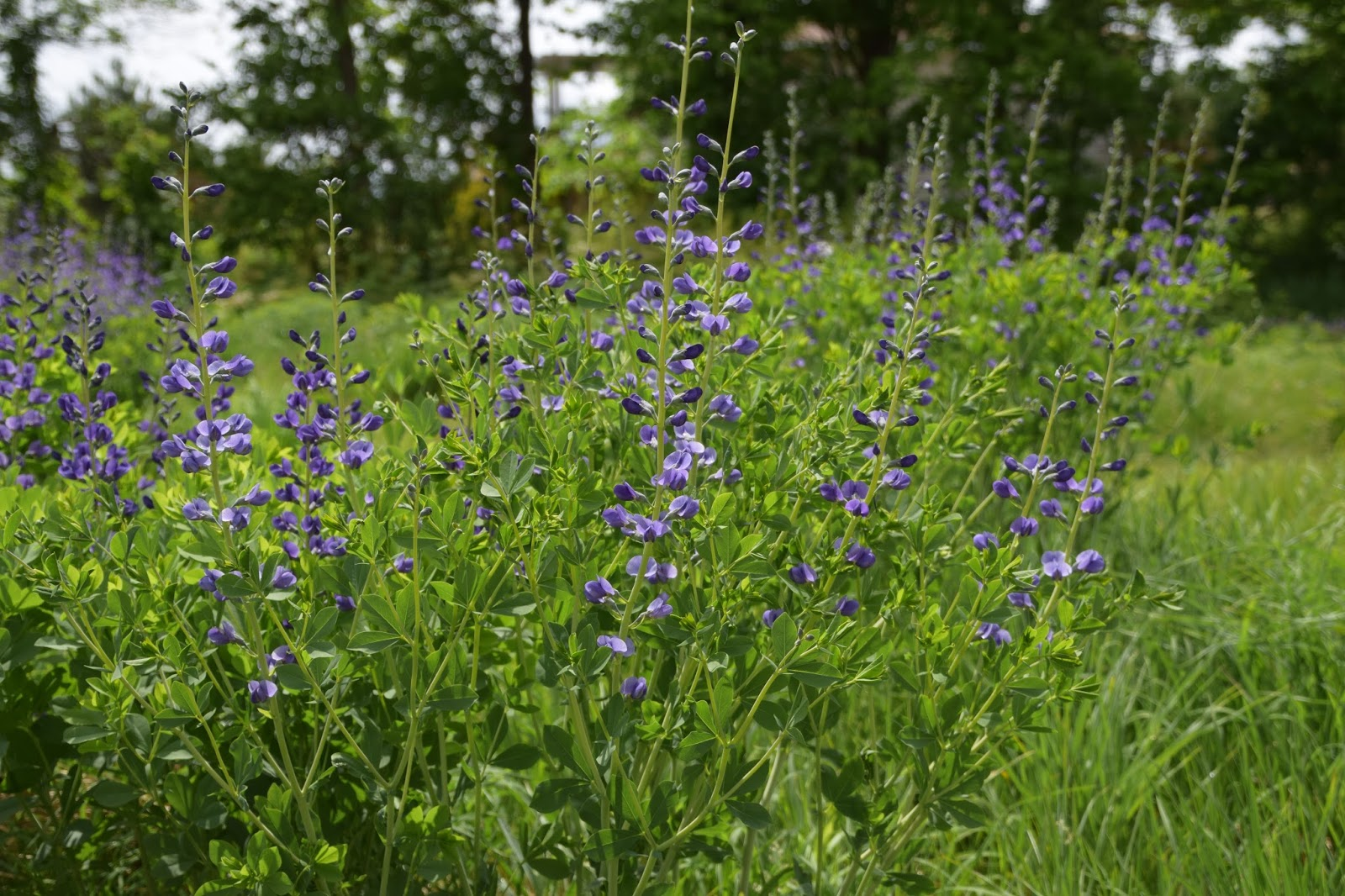 miriam goldberger s wildflower farm