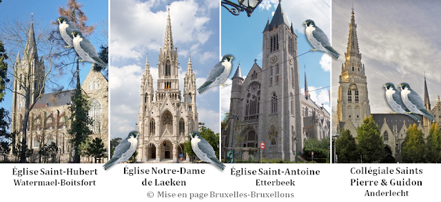 Faucons Pèlerins en Région Bruxelles-Capitale- Eglise Saint-Hubert (Watermael-Boitsfort) - Eglise Notre-Dame de Laeken (Crypte royale) - Eglise Saint-Antoine (Etterbeek) - Collégiale Saints Michel & Guidon (Anderlecht) - Bruxelles-Bruxellons