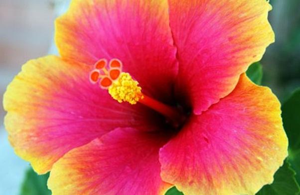 bunga yang memiliki manfaat aneh