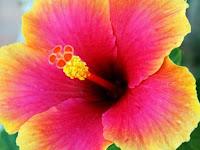Bunga Yang Punya Manfaat Sangat Aneh