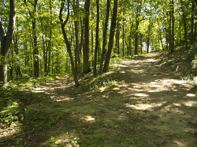 Mountain Biking Trails, East Rock Park, New Haven
