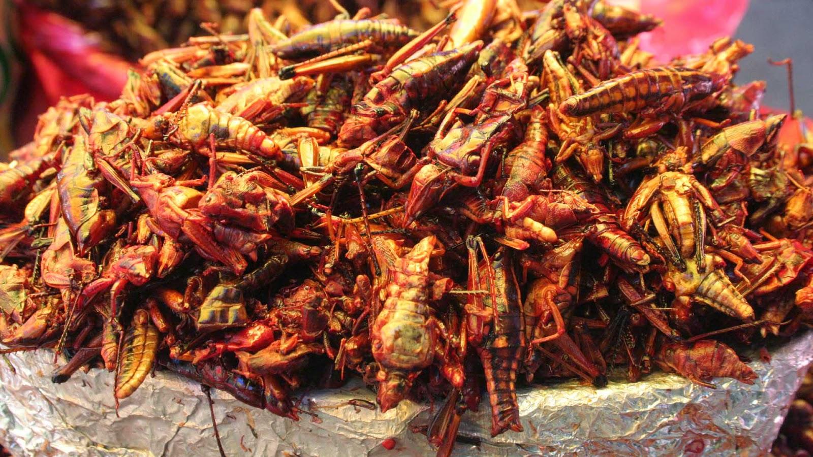 20 Delicias Gastronómicas Originarias De Oaxaca (parte 2