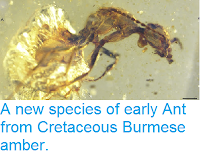 http://sciencythoughts.blogspot.co.uk/2013/07/a-new-species-of-early-ant-from.html