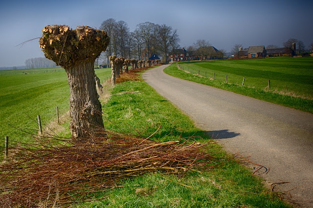 Living willow structures. Creating garden and park projects from living willow