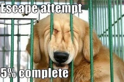 Lustige Hunde Bilder - Gefängnisausbruch