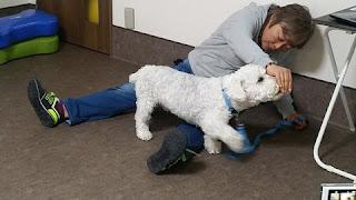 exercícios de fortalecimento muscular com cães