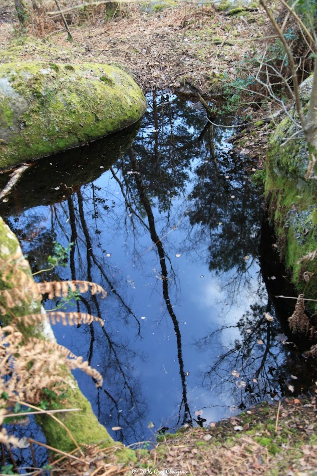 Petite mare au Cuvier, Fontainebleau, (C) Greg Clouzeau