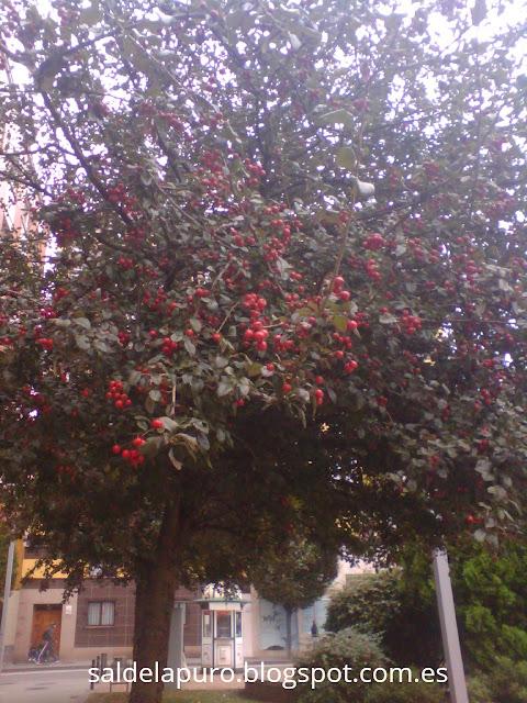 otoño-frutos-rojos
