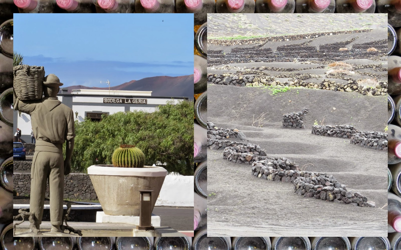 Vineyards on Lanzarote