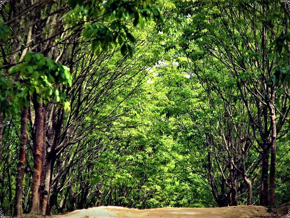 Ramu Rubber Garden