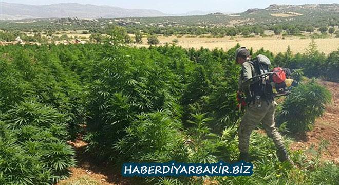 Diyarbakır Kocaköy Şaklat Köyü'nde uyuşturucu operasyonu: 10 gözaltı