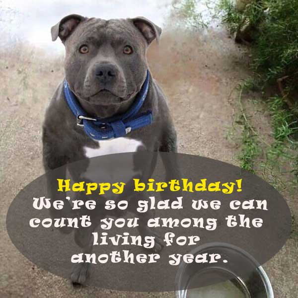ollection of funny birthday wishes that you can use to wish your friends, colleagues or family on Facebook or in person.
