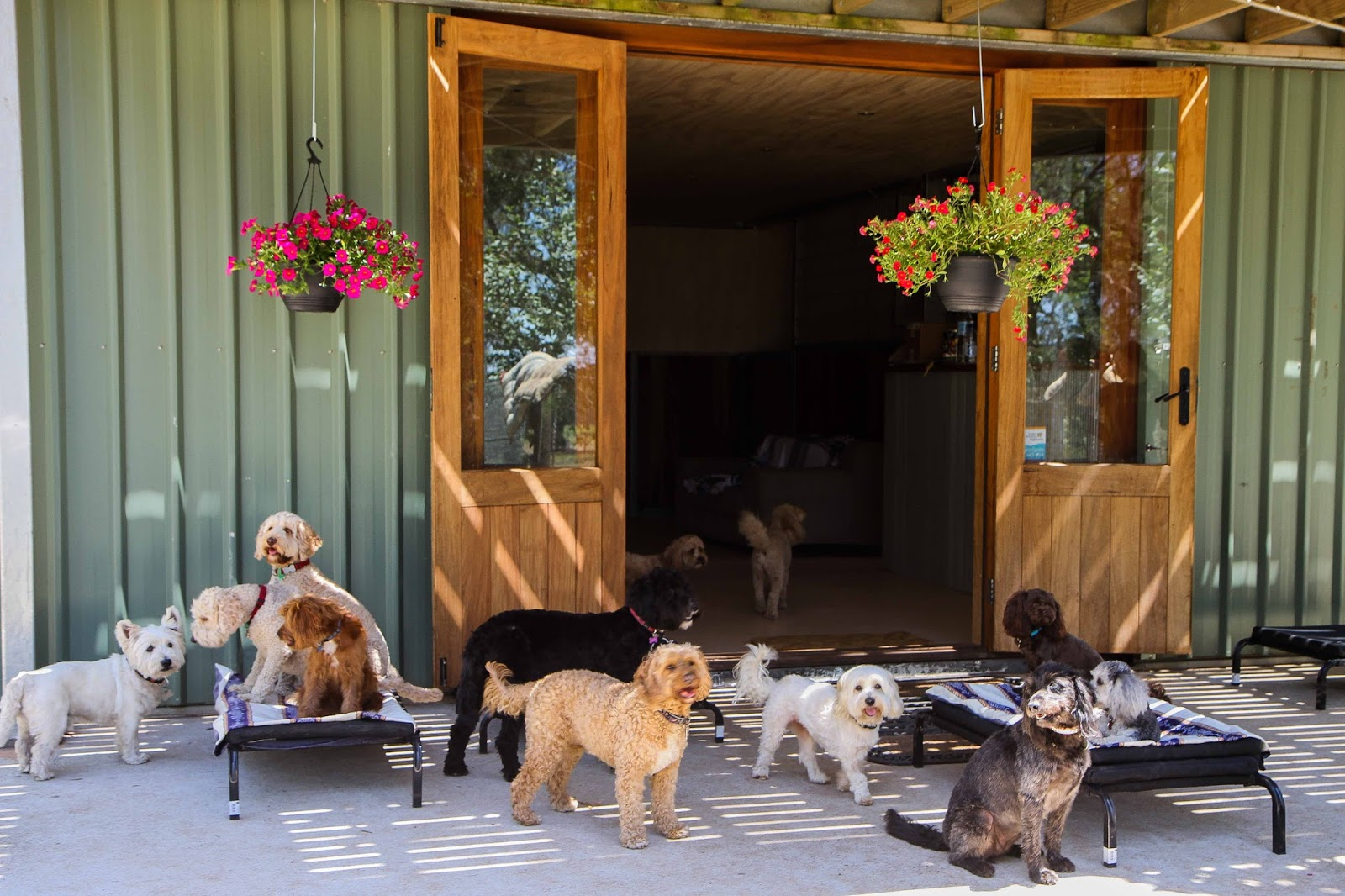 How to Train Your Dog to Go to its Place – How Do They Do it in Hunter Valley Pet Resort