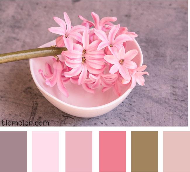 paleta-de-colores-imagen-6