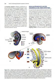 Libros de Medicina en pdf Embriología Médica Langman 11 Edición