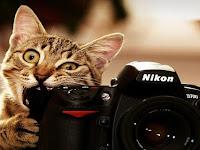 Kumpulan Foto Kucing Terbaru Yang Imut dan Menggemaskan