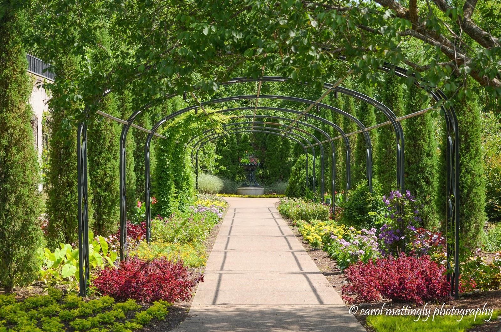 Carol Mattingly Photography Bradford Robertson Color Garden Cheekwood