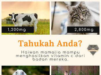 25 Kebaikan Vitamin C Yang Perlu Anda Tahu
