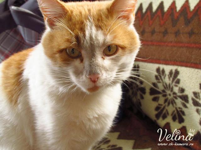 рыжий кот картинки