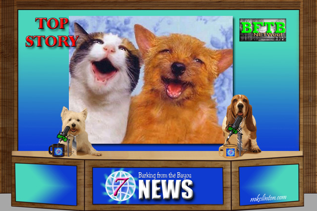 BFTB NETWoof Dog News top story on dog and cat memories