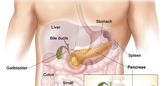 Info Artikel Tips Kesehatan Apa Itu Kanker Pankreas