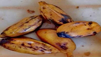 pisang,pisang timbatu,rebus