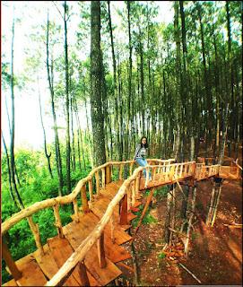 Spot Jembatan kayu di hutan pinus pengger dlingo