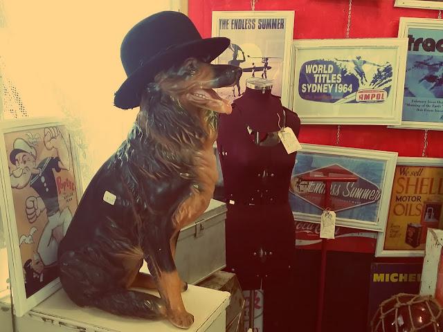 #dogs #milton #redhairedamazona